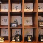 mycetozoa個展 装飾標本室