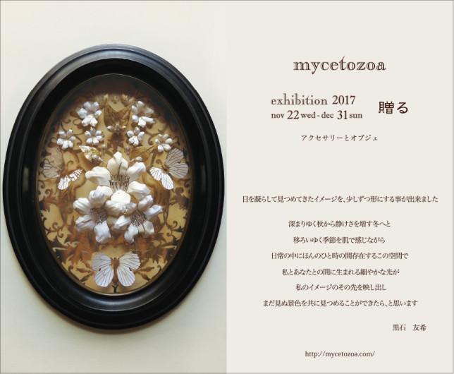 mycetozoa DM